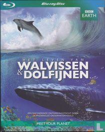 Het leven van Walvissen & Dolfijnen