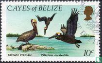 Braune Pelikan
