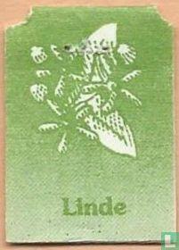 Linde / Tilleul