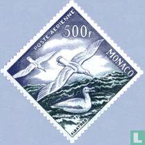 Grote albatrossen