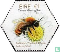 irish native bees