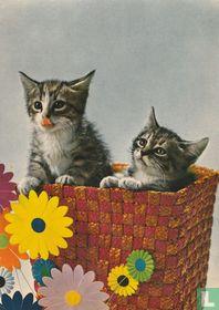 2 kittens in mandje