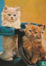 2 katjes op stoel