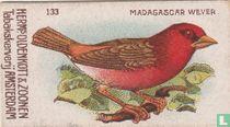 Madagascar Wever