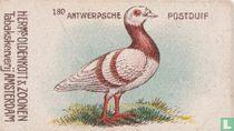 Antwerpsche Postduif
