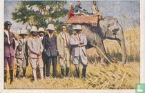 De olifant als jachtdier
