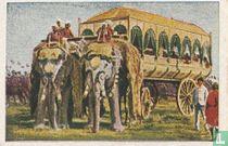 De olifant als pronkdier