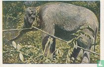 Het op transportstellen der olifanten