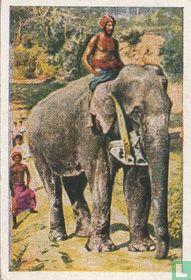 De olifant als landbouwer