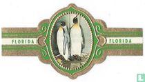 Imperial penguin
