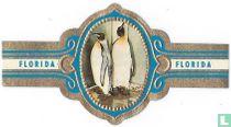 Imperial Pinguin