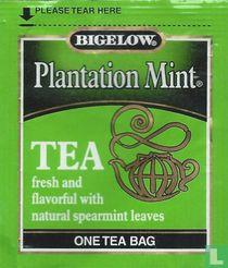 Plantation Mint [r]