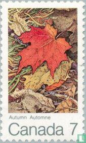 Esdoornbladeren (herfst)