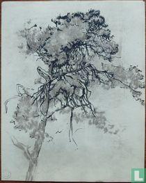 Schetstekening van een denneboom