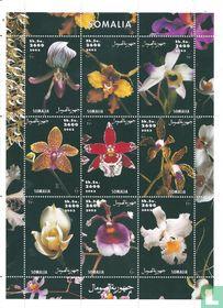 Orchideeén