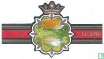 Colisa chuna De Chuna