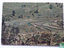 The beautiful terrasjes of paddo fielt on Bali Island