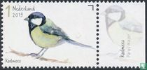 Garden birds - Great tit