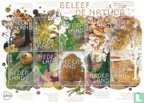 Beleef de Natuur - Bomen en Bladeren