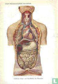 Geopende borst van de mens