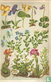 Alpenplanten Afbeelding 23