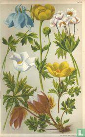 Alpenplanten Afbeelding 16