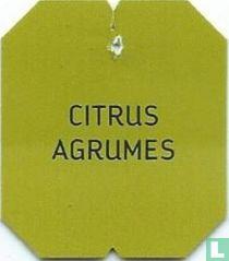 Delhaize - Citrus Agrumes / Fruity Green Tea