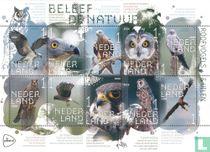Beleef de Natuur - Roofvogels en Uilen