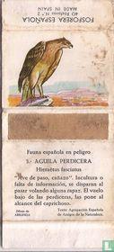 3. Aguila Perdicera