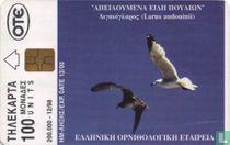 Audouin's gull (Ichthyaetus audouinii)