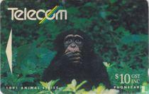 Pan Troglodyle Chimpanzee
