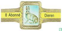 [Arctic hare]
