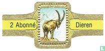 [Alpine ibex]