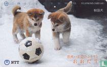 Odate - Akita Dogs With Football