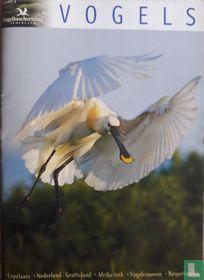 Vogels 1 voorjaar