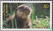 Fishing Otter