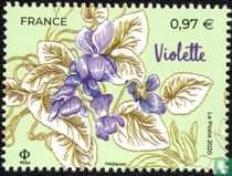 Bloemen uit Grasse en de Middellandse Zee kopen
