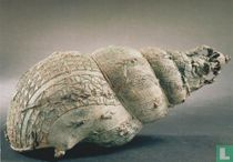 Ceremonial container in the form of a shell