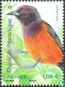 Oriole de Martinique kopen