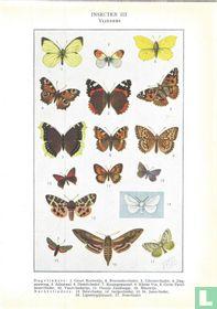 Insecten III - Vlinders