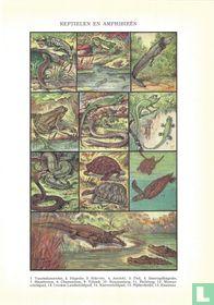 Reptielen en amphibieën