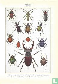Insecten I - Kevers