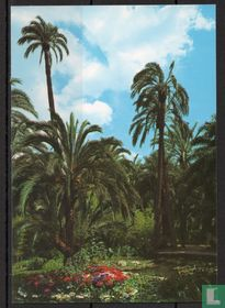 Elche Palmengarten