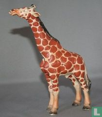 Giraf stier