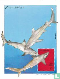 Haaien kopen