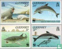 WWF - zeeleven bij Guernsey