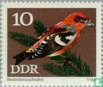 Oiseaux chanteurs protégés acheter
