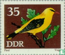 Oiseaux chanteur protege acheter