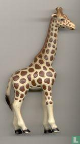 Giraf wijfje