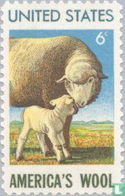 American wool